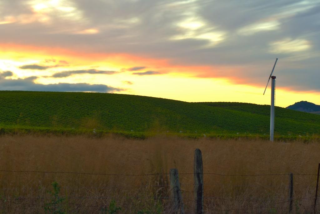 sunsetwine.jpg