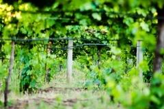 cosentino-May_20,_201416-2